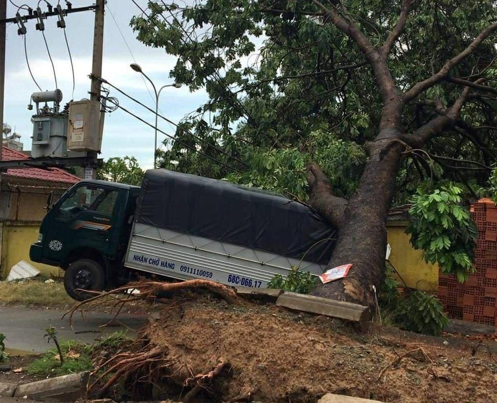 Cây xanh bật gốc do mưa lớn ở Sài Gòn