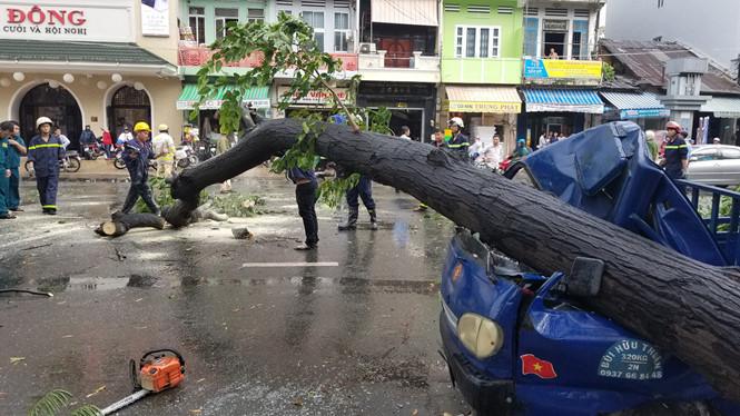 Cây xanh bật gốc ở Sài Gòn