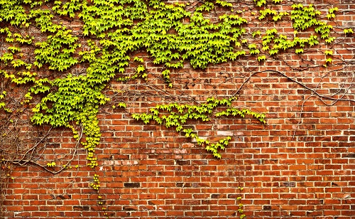 Mơ thấy bức tường
