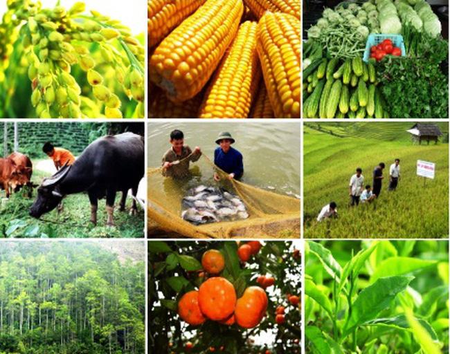 Mô hình kinh tế nông thôn được hỗ trợ từ nhiều kênh