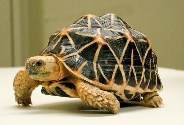 mơ con rùa