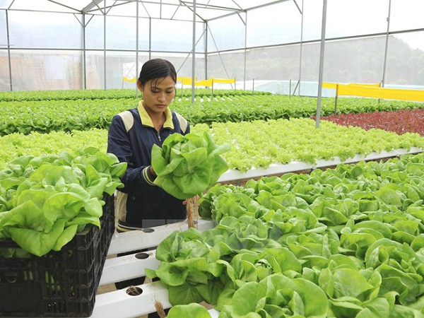 Xây dựng nền nông nghiệp hiện đại, thông minh, ngang tầm quốc tế