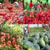 Xuất khẩu trái cây Việt- niềm vui vfa thách thức