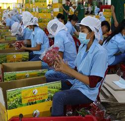 Xuất khẩu rau quả Việt Nam - trở lại quỹ đạo tăng trưởng