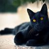 Giải mã chi tiết ý nghĩa giấc mơ thấy mèo đen