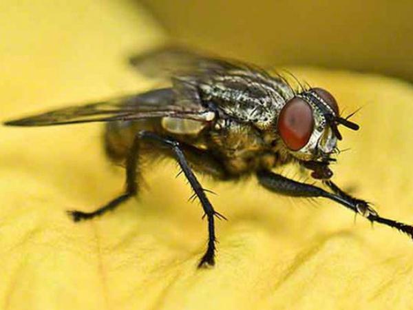 Nằm mơ thấy con ruồi báo hiệu điềm gì trong cuộc sống