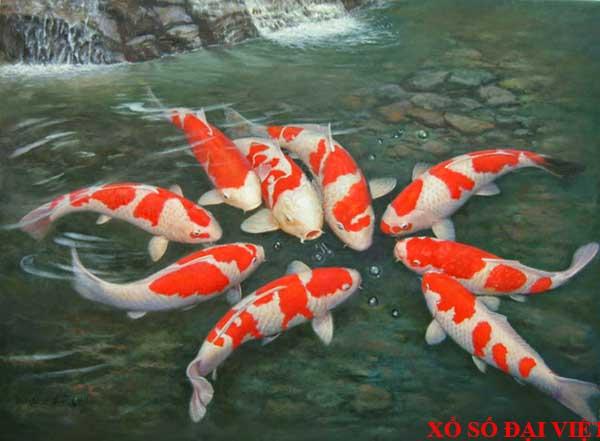 Giải mã ý nghĩa nằm mơ thấy cá koi là điềm báo gì