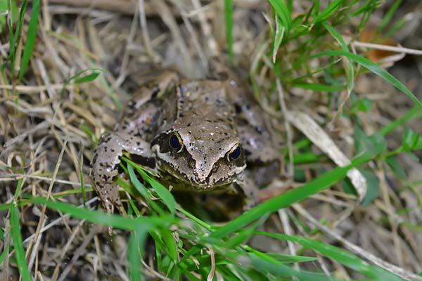 Giải mã ý nghĩa nằm mơ thấy ếch