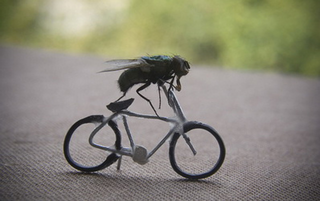 Giải mã giấc mơ thấy con ruồi là điềm báo gì