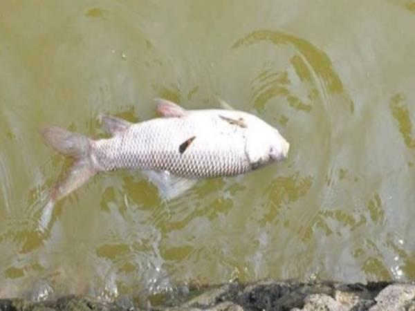 Cá chết là hên hay xui? Nên đánh con gì khi thấy cá chết